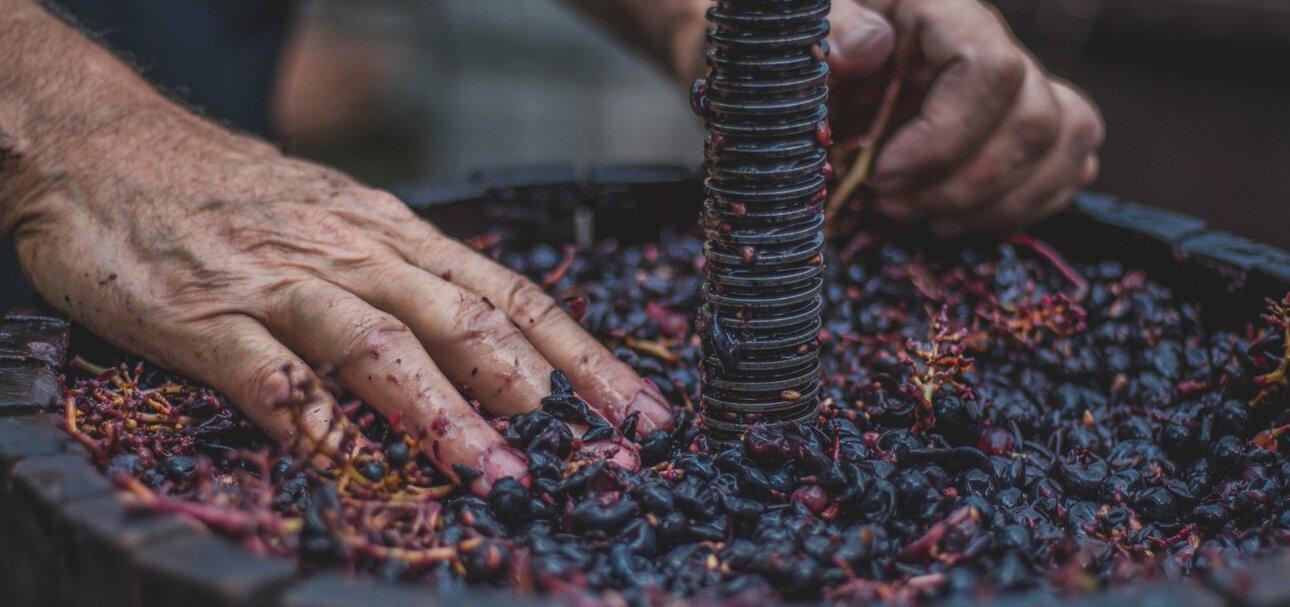 Billiger Wein - teuer erkauft. Die Oxfam-Studie belegt Missstände im südafrikanischen Weinanbau.