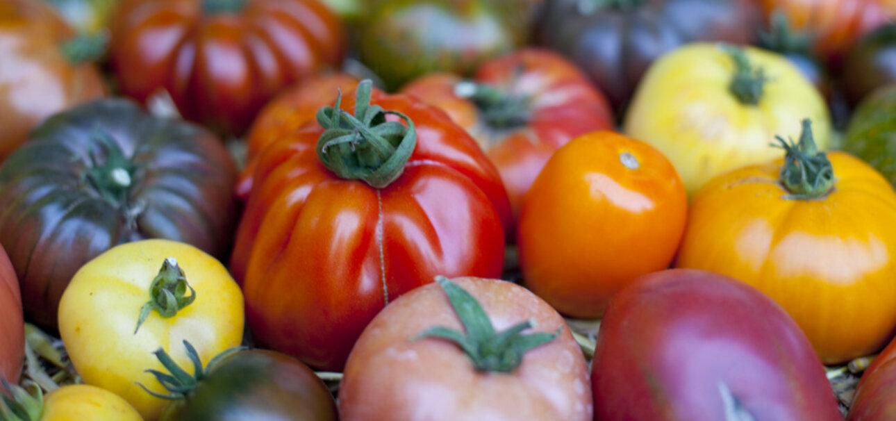 Ginge es nach den Konzernen, wäre es mit der Tomatenvielfalt bald vorbei.