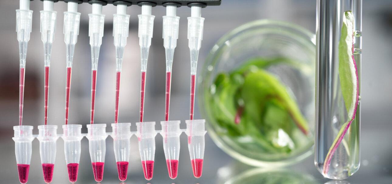Pestizide sind durch ihre flächendeckende Ausbringung allgegenwärtig. io-Letilialucida - Fotolia