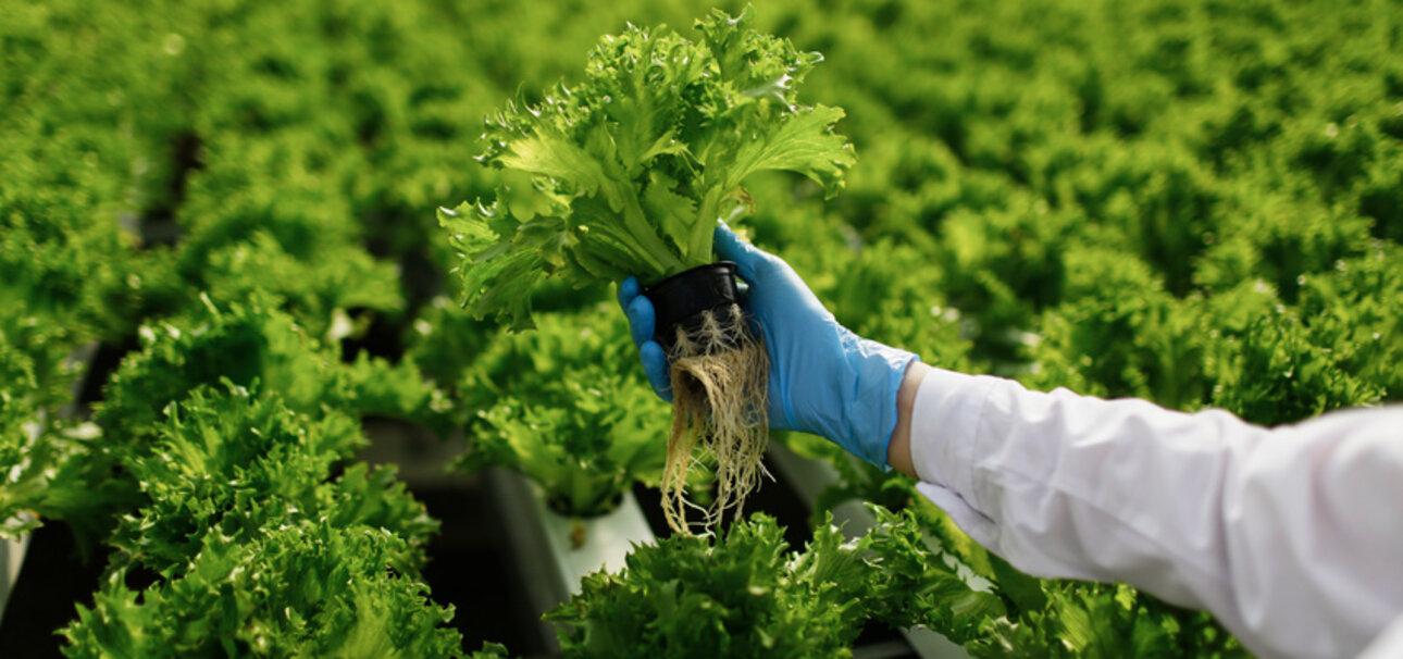 Lebensmittelkontrolle, Qualitätskontrolle Bio-Lebensmittel