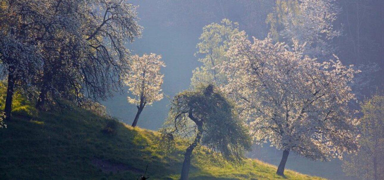 Wertvolle Kulturlandschaft: Streuobstwiesen haben Insekten und Vögeln viel zu bieten. Copyright: www.fotolia.de