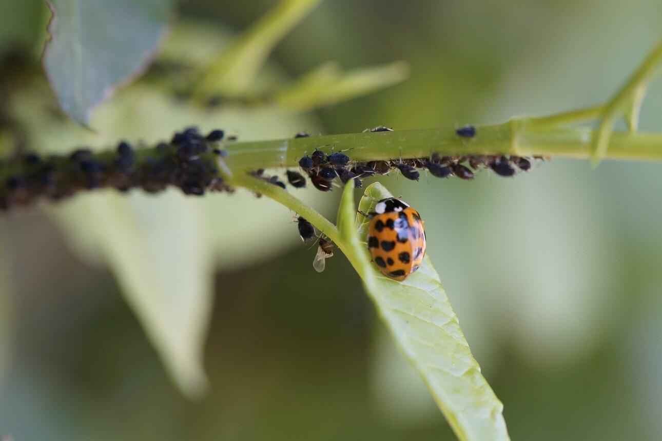 Natürliches Pflanzenschutzmittel, statt Pestizide
