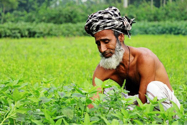 Jute-Bauer in Bangladesch