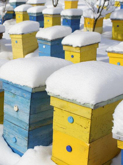 Frostige Temperaturen können den Bienen wenig anhaben. Sie halten sich gegenseitig warm.